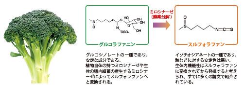 健康野菜「ブロッコリー」の解毒効果