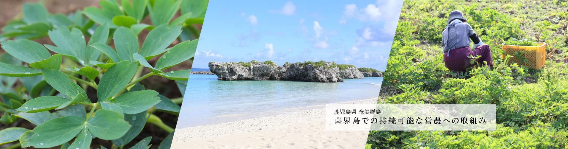 喜界島での持続可能な営農への取り組み